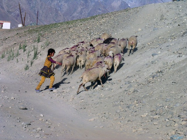 Stanzin Dorjey
