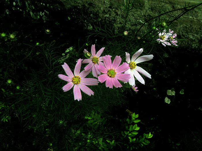 151002-6345-flowers
