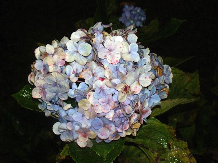 151003-1523-flower