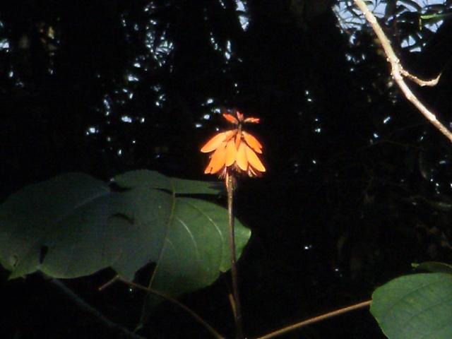 151008-1080029-flower
