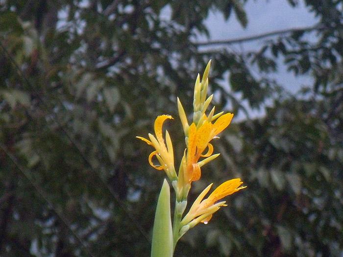 151011-2995-flower