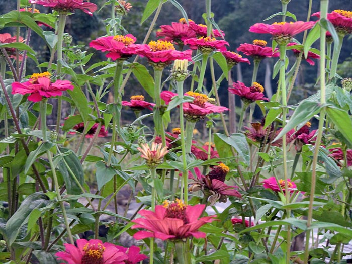 151011-4556-flowers